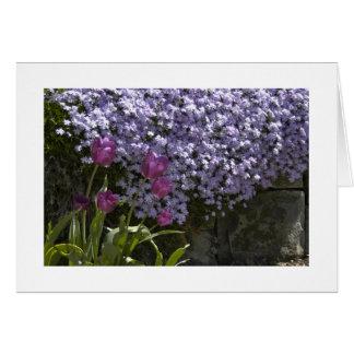 Tulips and Phlox Card