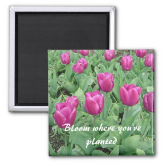 Tulips - Bloom Where You're Planted Square Magnet