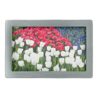 Tulips field in red and white with blue hyacinths belt buckle