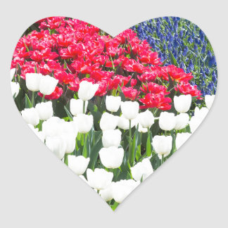 Tulips field in red and white with blue hyacinths heart sticker