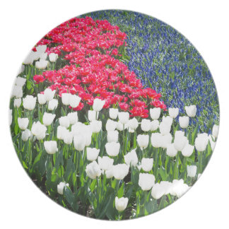 Tulips field in red and white with blue hyacinths party plate
