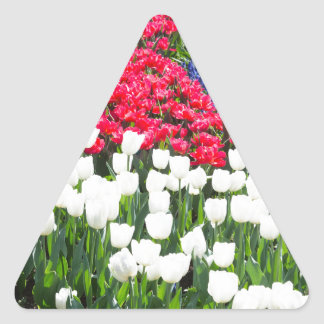 Tulips field in red and white with blue hyacinths triangle sticker
