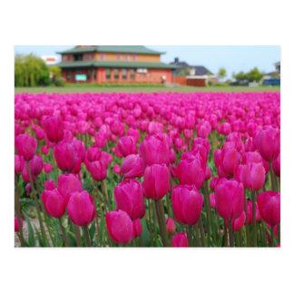 Tulips Field Postcard