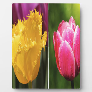 Tulips Flowers Plaque