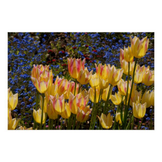 Tulips & Forget-me-nots Poster