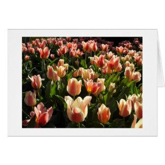 tulips galore greeting card