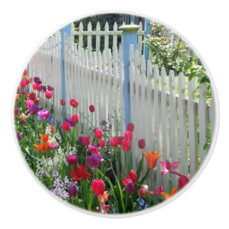 tulips garden white picket fence Cape May NJ photo Ceramic Knob