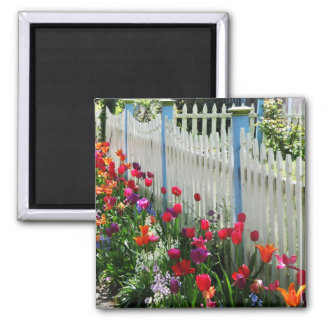 tulips garden white picket fence Cape May NJ photo Magnet