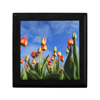 tulips gift box
