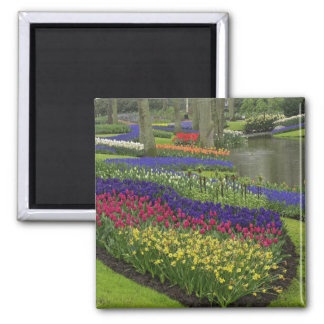 Tulips, Grape Hyacinth, and daffodils, Square Magnet