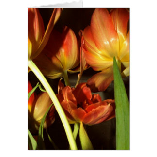 Tulips greetings cards