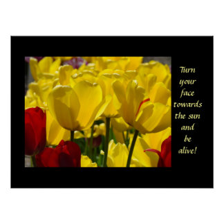 Tulips Healing Touch Turn Your Face Towards Sun Poster