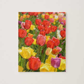 Tulips in the Garden Jigsaw Puzzle
