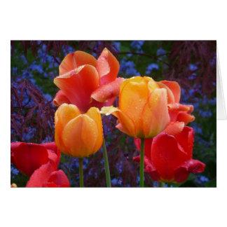 Tulips in the Rain Card