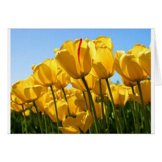 Tulips.jpg Greeting Card
