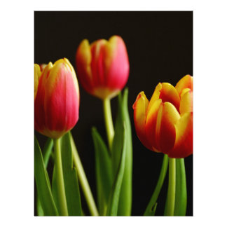 tulips letterhead