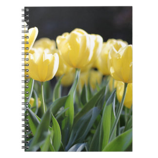 Tulips Notebooks