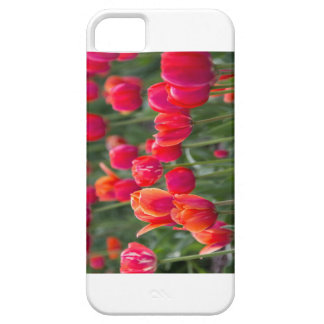 Tulips on a phone iPhone 5 cases