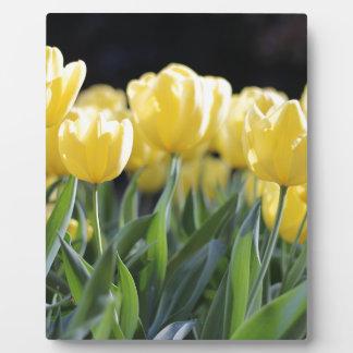 Tulips Plaque
