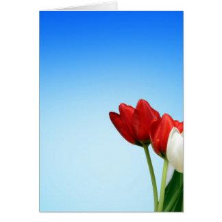 Tulips Red White Spring Aesthetics Aesthetic Card