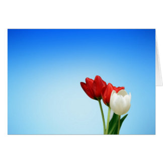 Tulips Red White Spring Aesthetics Aesthetic Note Card