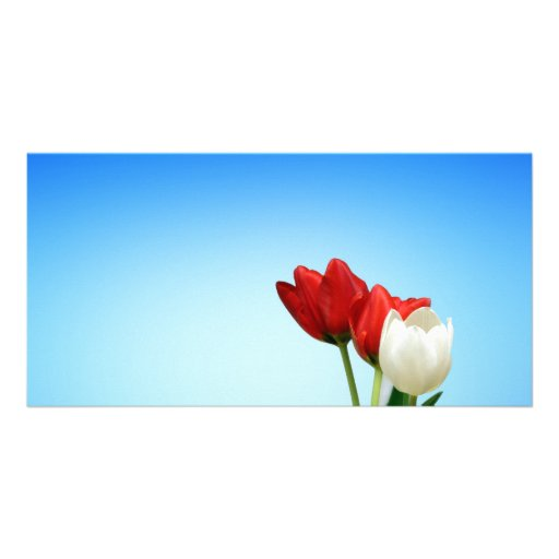 Tulips Red White Spring Aesthetics Aesthetic Personalized Photo Card