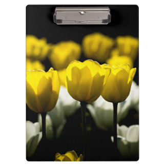Tulips Yellow And White Clipboards