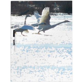 Tundra Swan Birds Wildlife Animals Dry Erase Board