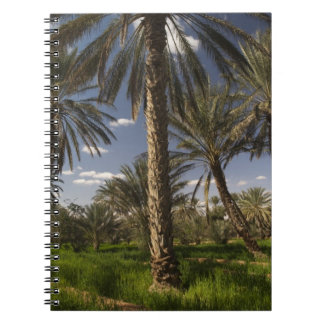 Tunisia, Ksour Area, Ksar Ghilane, date palm Notebook
