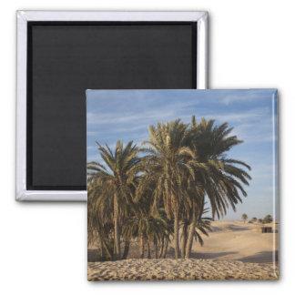 Tunisia, Sahara Desert, Douz, Great Dune, palm Magnet
