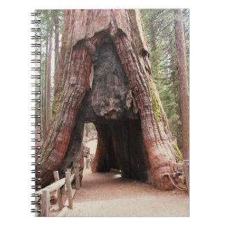 Tunnel Tree- Yosemite Notebook