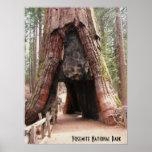 Tunnel Tree- Yosemite Poster