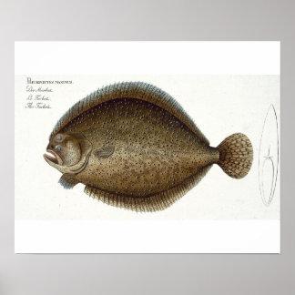 Turbot (Pleuronectes Maximus) plate XLIX from 'Ich Poster
