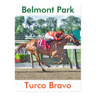 Turco Bravo wins the Flat Out Postcard