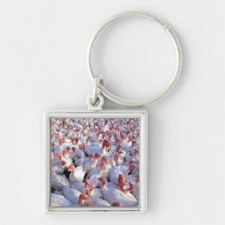 Turkey Farm Silver-Colored Square Keychain