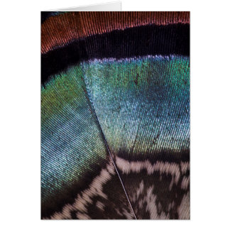 Turkey feather close up card