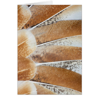 Turkey Feather Fanned Design Card