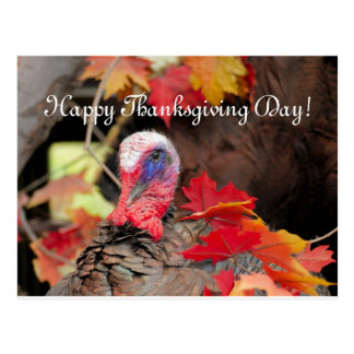 Turkey In Leaves Thanksgiving Day Postcards