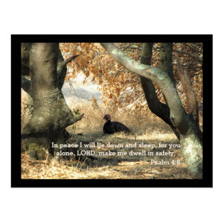 Turkey Paradise Psalm Postcard