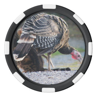 Turkey Poult And Cat Poker Chip