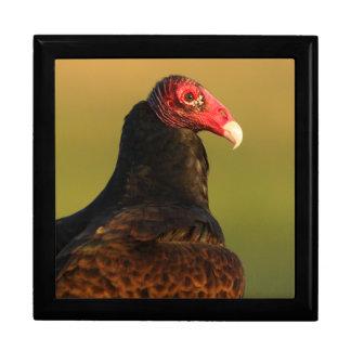 turkey vulture keepsake box