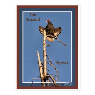 Turkey Vulture Sunning Postcard