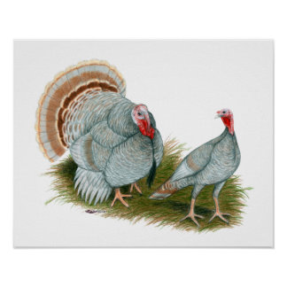 Turkeys:  Lilac Poster