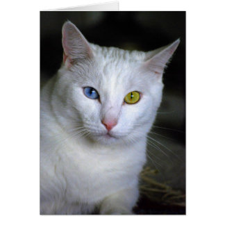 Turkish Angora Cat With Mismatched Eyes Card