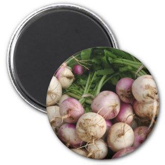 Turnips Magnet