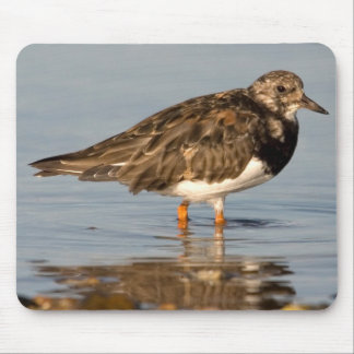 Turnstone Bird Mouse Mat