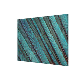 Turquoise Kingfisher Feather Design Canvas Print