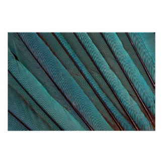 Turquoise Kingfisher Feather Design Poster