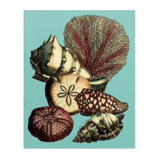Turquoise Shell and Red Coral Collection Acrylic Wall Art