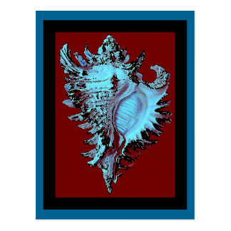 Turquoise Shell on Deep Red Postcard